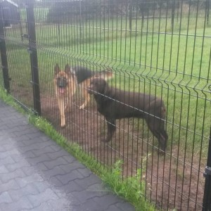 hondenland 18