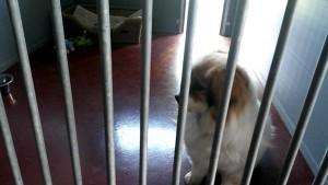 hondenland 21